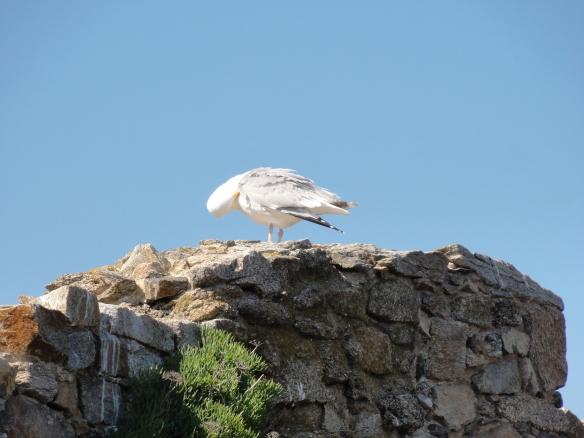 Le Chateaux est bien gardé... Mieux vaut montrer plume blanche!